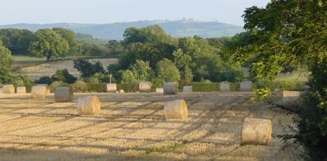 Harvest header